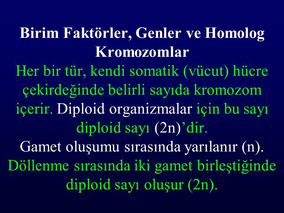 Birim Faktörler, Genler ve Homolog Kromozomlar Her bir tür, kendi somatik (vücut) hücre çekirdeğinde belirli sayıda kromozom içerir. Diploid organizma