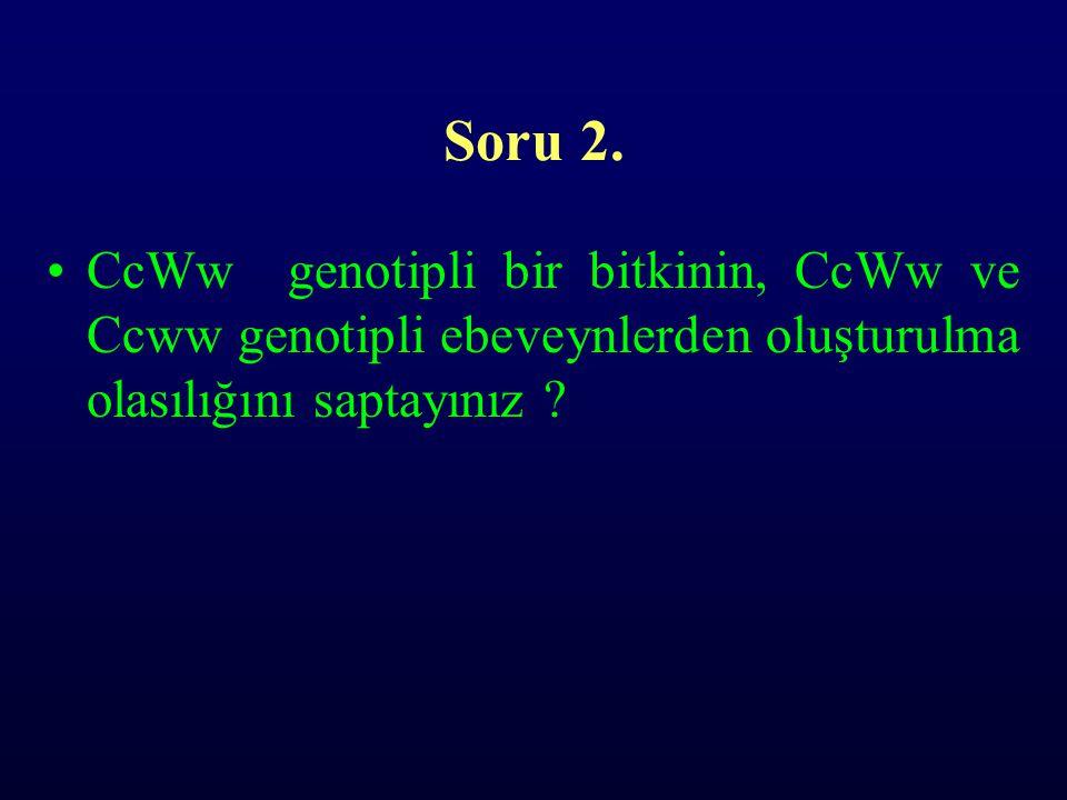 Soru 2. •CcWw genotipli bir bitkinin, CcWw ve Ccww genotipli ebeveynlerden oluşturulma olasılığını saptayınız ?