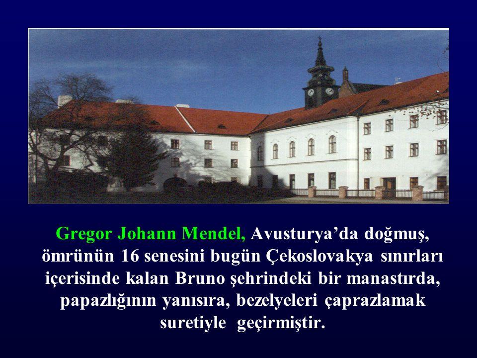 Gregor Johann Mendel, Avusturya'da doğmuş, ömrünün 16 senesini bugün Çekoslovakya sınırları içerisinde kalan Bruno şehrindeki bir manastırda, papazlığ