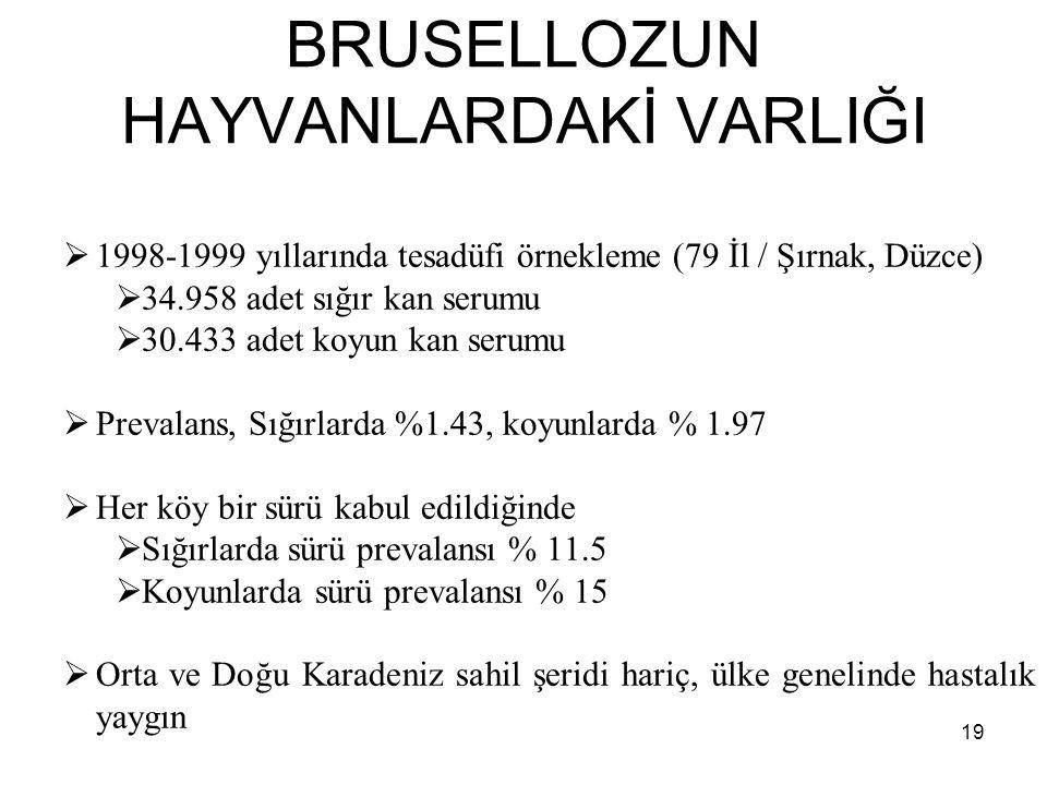 BRUSELLOZUN HAYVANLARDAKİ VARLIĞI  1998-1999 yıllarında tesadüfi örnekleme (79 İl / Şırnak, Düzce)  34.958 adet sığır kan serumu  30.433 adet koyun