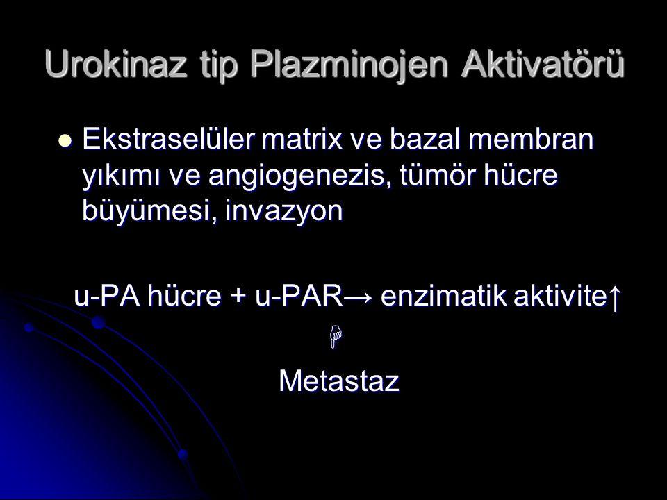 Urokinaz tip Plazminojen Aktivatörü  Ekstraselüler matrix ve bazal membran yıkımı ve angiogenezis, tümör hücre büyümesi, invazyon u-PA hücre + u-PAR→
