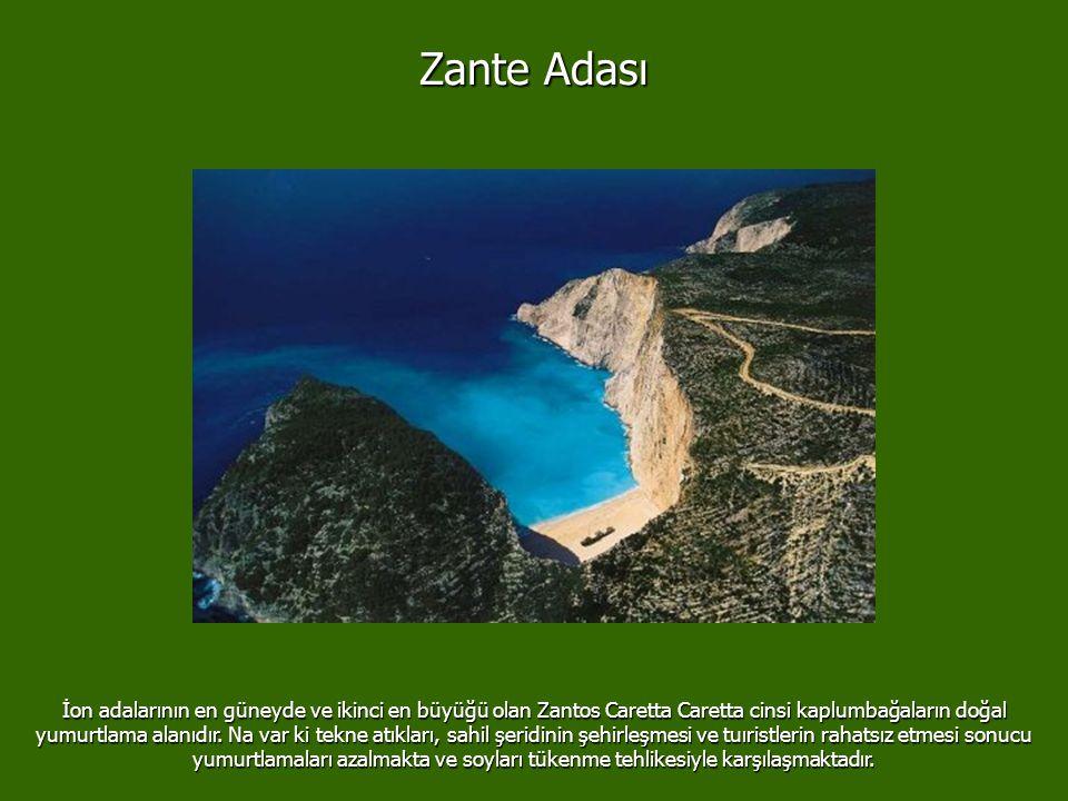 Gölcük/ Türkiye 17 Ağustos 1999 03:02'de Türkiye Izmit ve Gölcük bölgesini vuran deprem en yüksek derecesi 9 olan rihter ölçeğine göre 7.4 şiddetindey