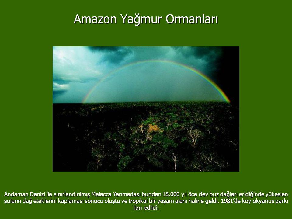 Malacca/ Tayland Amazon Yağmur Ormanları Brezilya'nın %42'sini kaplar. Amazonlar dünyanın en büyük orman ekosistemini oluşturur ve 3.3 km2 yer kaplar.