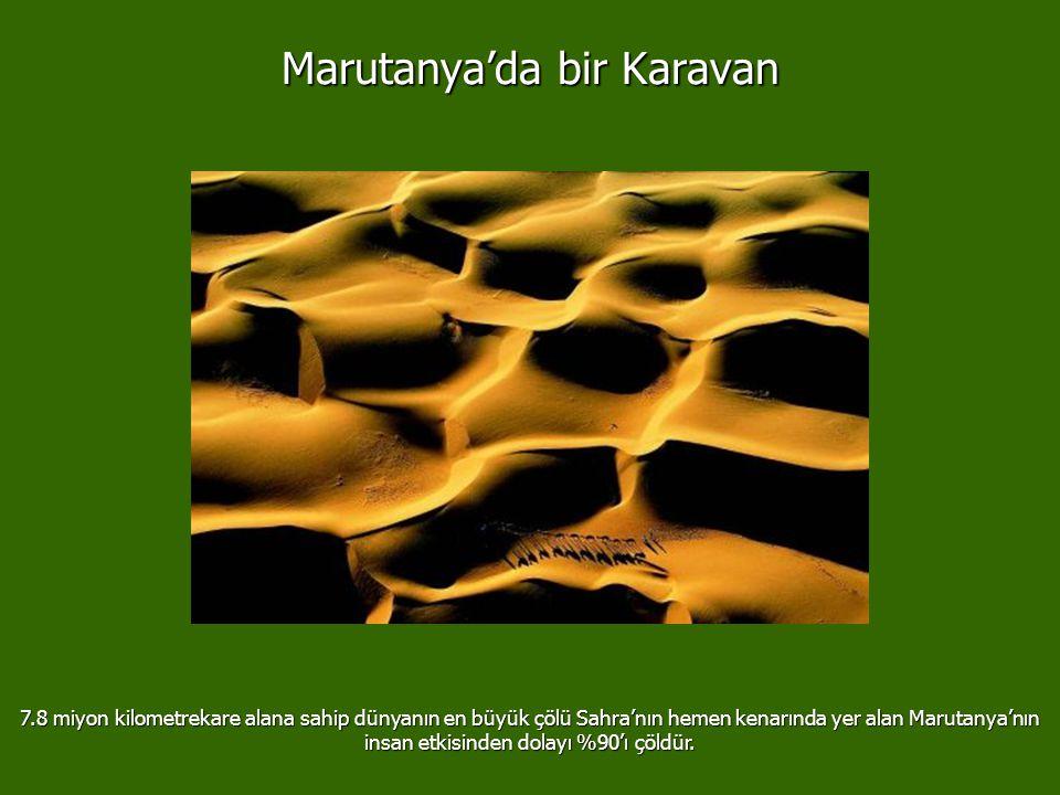 Marutanya'da bir Karavan 7.8 miyon kilometrekare alana sahip dünyanın en büyük çölü Sahra'nın hemen kenarında yer alan Marutanya'nın insan etkisinden dolayı %90'ı çöldür.