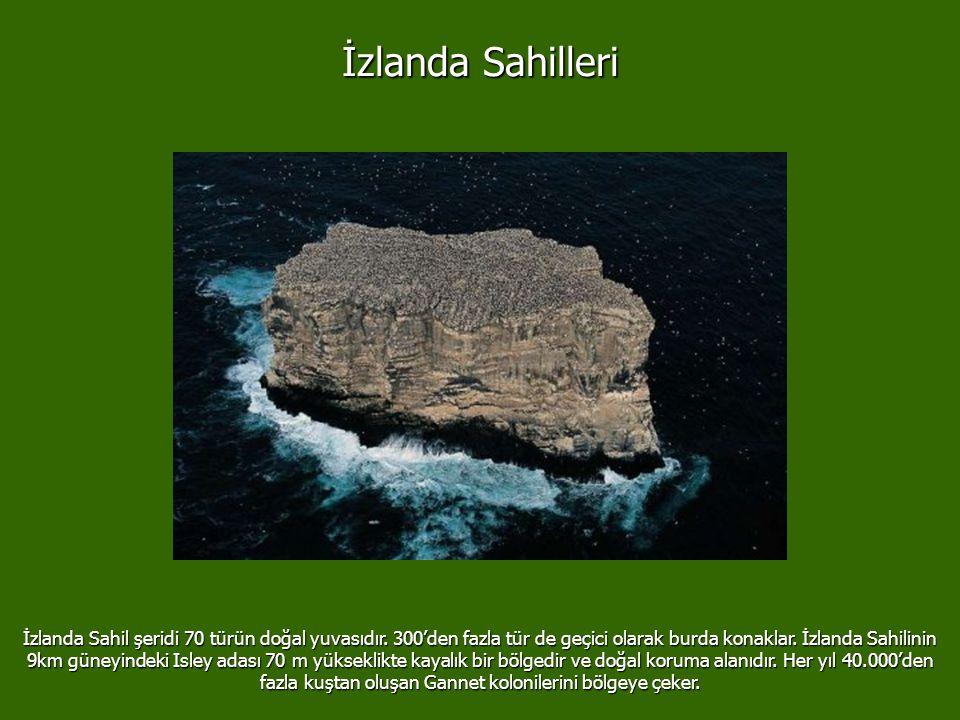 İzlanda Sahilleri İzlanda Sahil şeridi 70 türün doğal yuvasıdır.