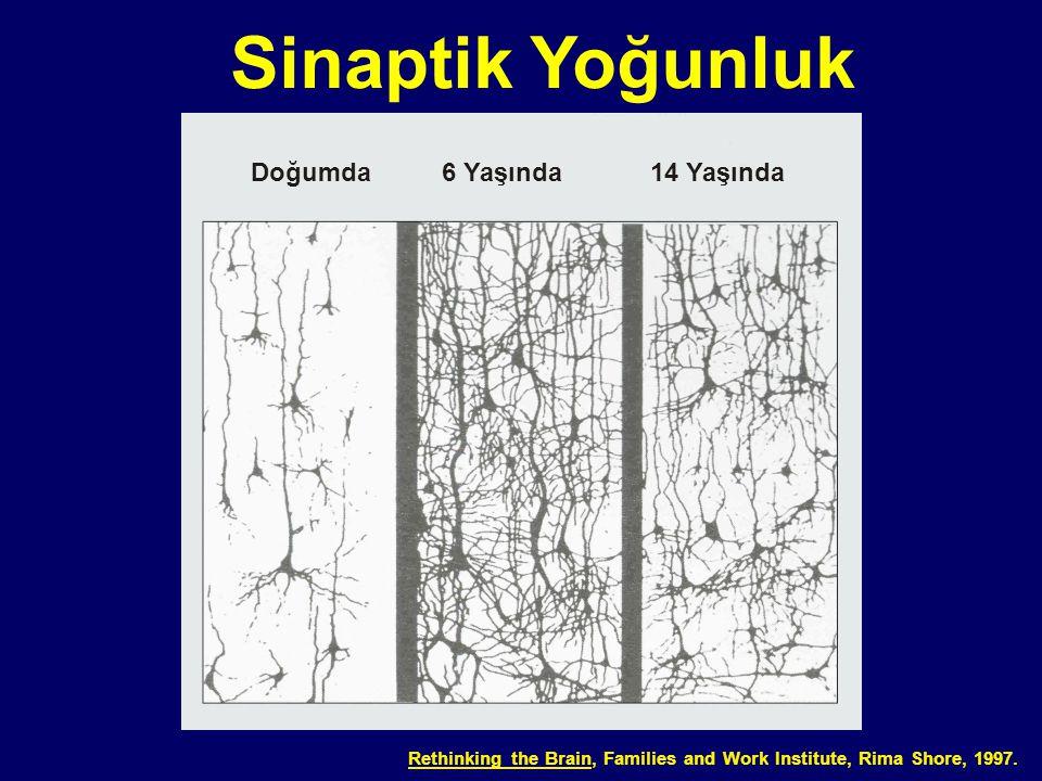 03-012 Sinaptik Yoğunluk Rethinking the Brain, Families and Work Institute, Rima Shore, 1997. Doğumda6 Yaşında14 Yaşında