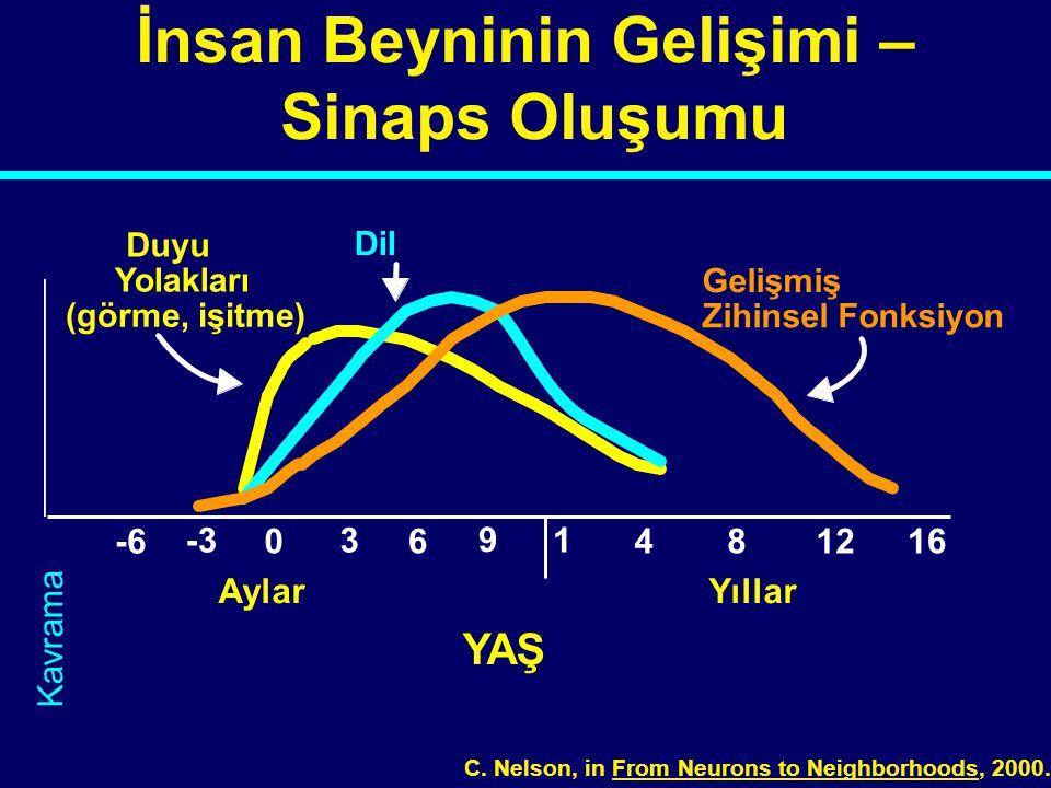 0 1 481216 YAŞ İnsan Beyninin Gelişimi – Sinaps Oluşumu Duyu Yolakları (görme, işitme) Dil Gelişmiş Zihinsel Fonksiyon 3 6 9 -3 -6 AylarYıllar C. Nels