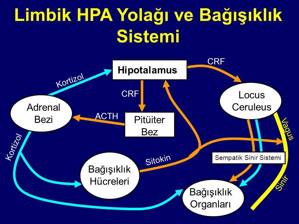 Limbik HPA Yolağı ve Bağışıklık Sistemi Hipotalamus Pitüiter Bez Bağışıklık Organları Locus Ceruleus CRF ACTH Kortizol Sitokin Sempatik Sinir Sistemi