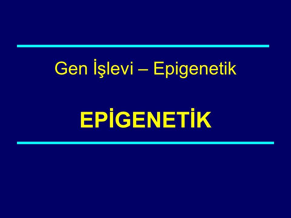 Gen İşlevi – Epigenetik EPİGENETİK