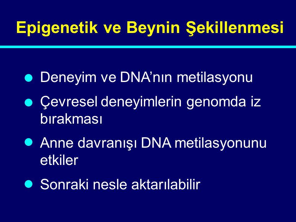 04-144 Epigenetik ve Beynin Şekillenmesi Deneyim ve DNA'nın metilasyonu Çevresel deneyimlerin genomda iz bırakması Anne davranışı DNA metilasyonunu et