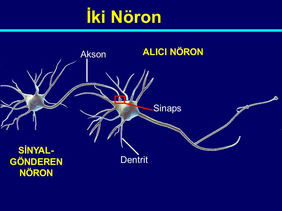 Neal Halfon 04-212 Ses Görüntü Koku Dokunma Kaslardaki durum duyusu Tat
