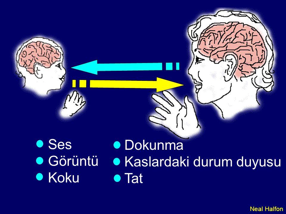 03-078 Deneyim ve Beyin Gelişimi Erken yaşlardaki uyaranlar nöron fonksiyonlarını farklılaştıran genetik yolakları açar – kritik ve duyarlı dönemler İnsanlar, maymunlar ve fareler üzerinde yapılan çalışmalardan Uyaranlar milyarlarca nöron arasındaki bağlantıların (sinapsis) oluşumunu etkiler (duyarlı dönemler) Okuryazarlığı, davranışı ve sağlığı etkileyen beyin yolakları erken oluşur.