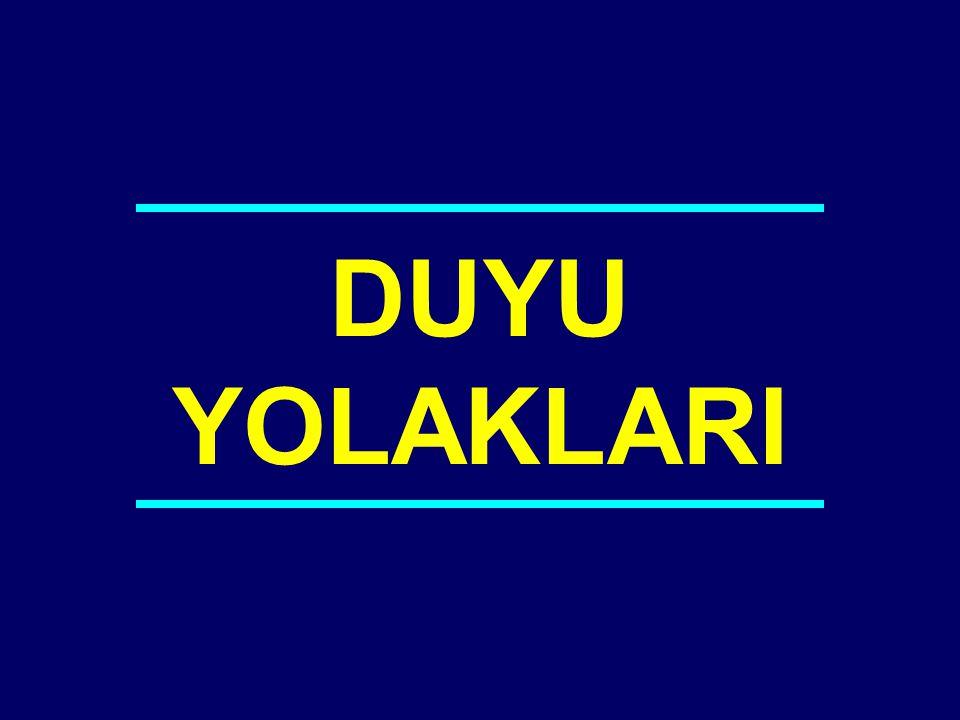 DUYU YOLAKLARI 04-042