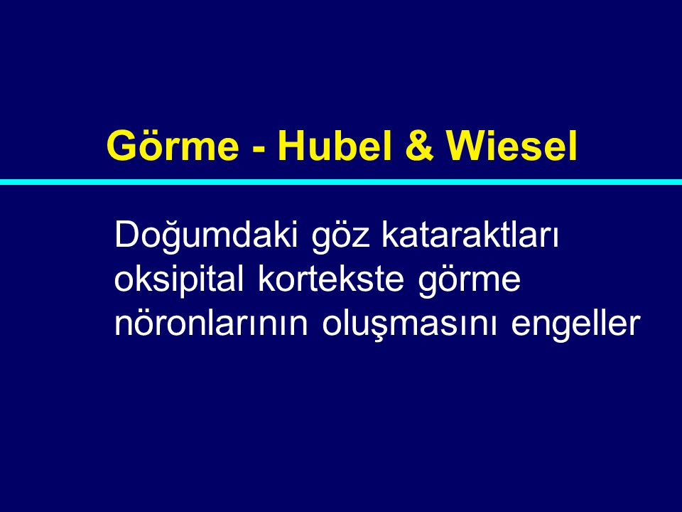 03-079 Doğumdaki göz kataraktları oksipital kortekste görme nöronlarının oluşmasını engeller Görme - Hubel & Wiesel