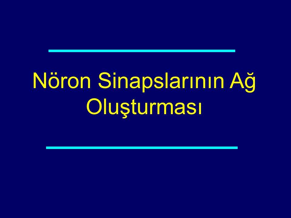Nöron Sinapslarının Ağ Oluşturması 05-210