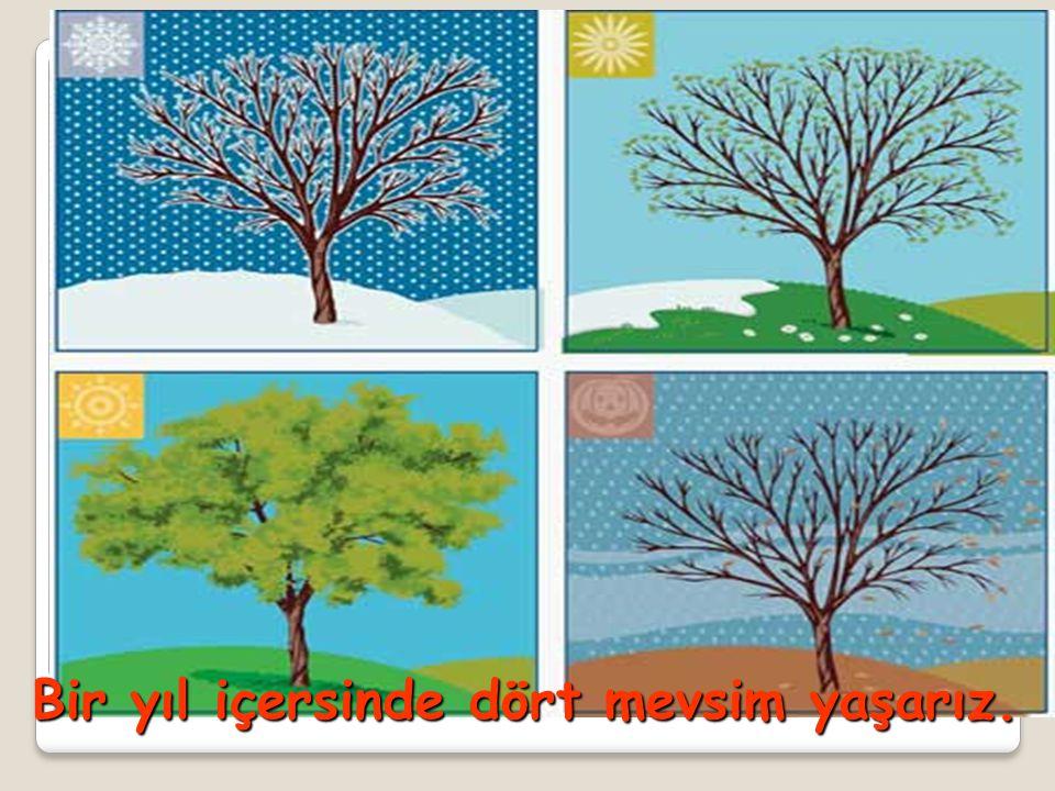  Mevsimleri ve her mevsime ait özellikleri biliyor muyuz
