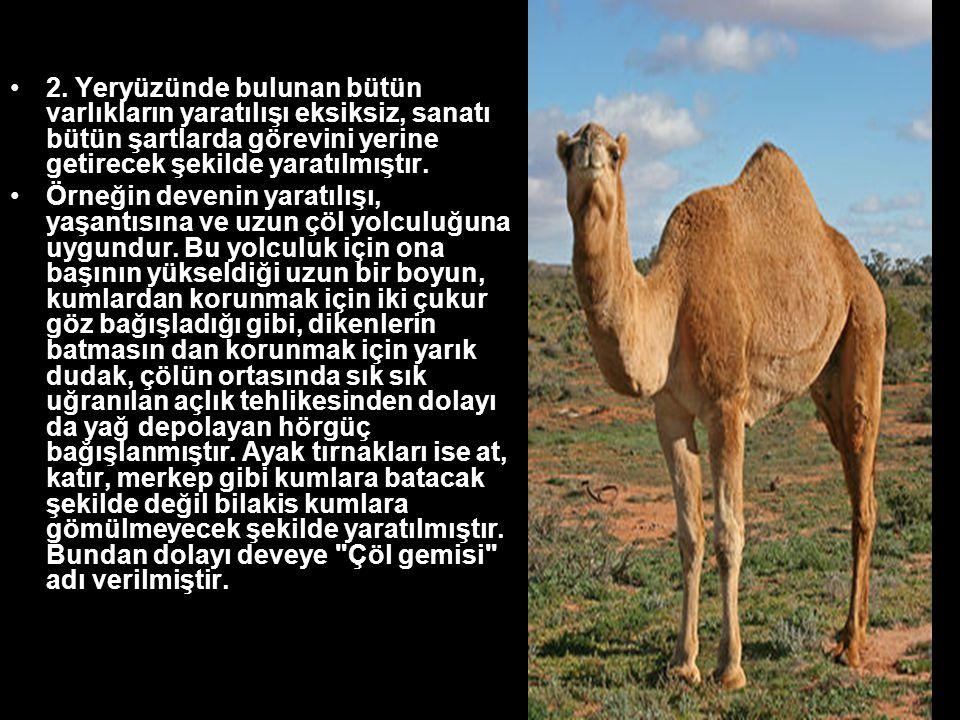 •2. Yeryüzünde bulunan bütün varlıkların yaratılışı eksiksiz, sanatı bütün şartlarda görevini yerine getirecek şekilde yaratılmıştır. •Örneğin devenin