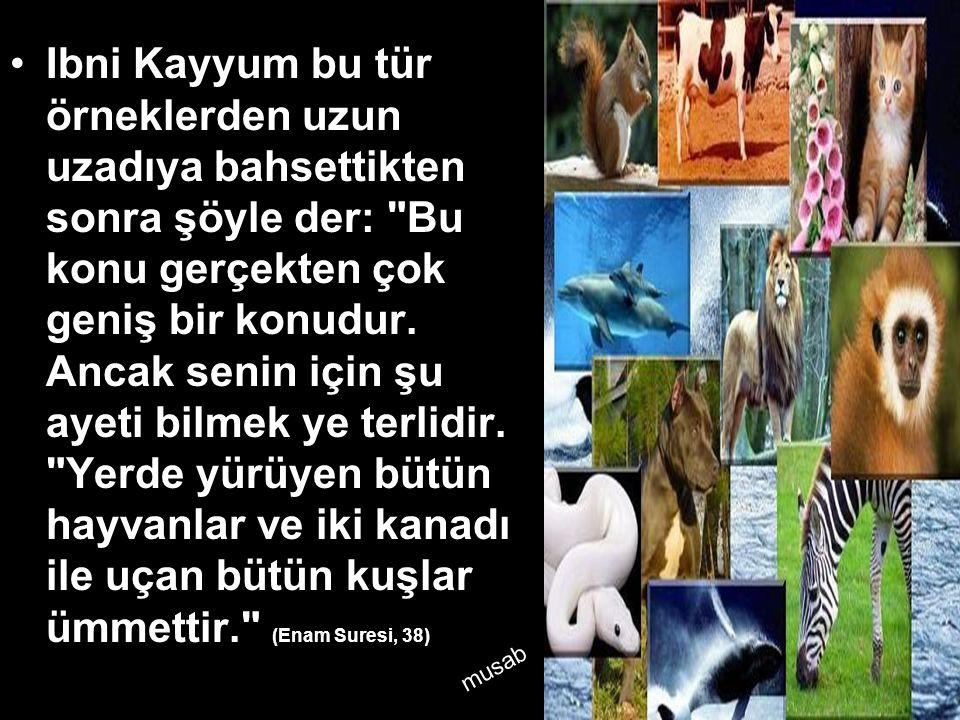 •Ibni Kayyum bu tür örneklerden uzun uzadıya bahsettikten sonra şöyle der: Bu konu gerçekten çok geniş bir konudur.