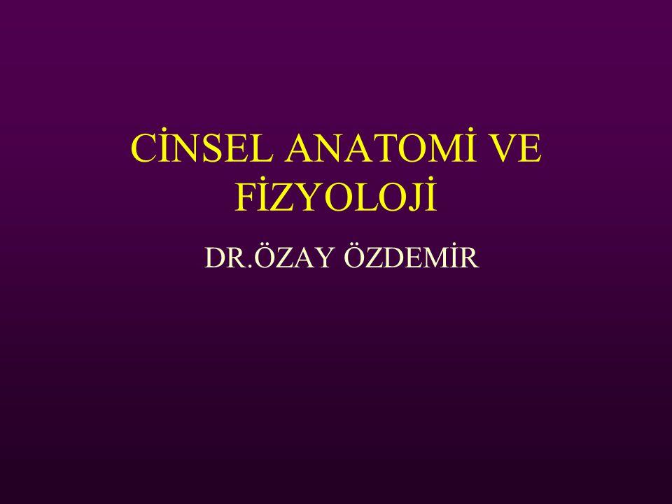 CİNSEL ANATOMİ VE FİZYOLOJİ DR.ÖZAY ÖZDEMİR