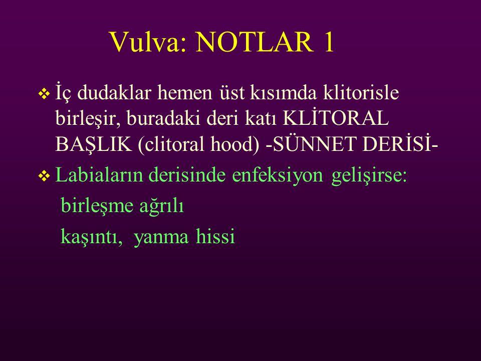 Vulva: NOTLAR 1  İç dudaklar hemen üst kısımda klitorisle birleşir, buradaki deri katı KLİTORAL BAŞLIK (clitoral hood) -SÜNNET DERİSİ-  Labiaların d