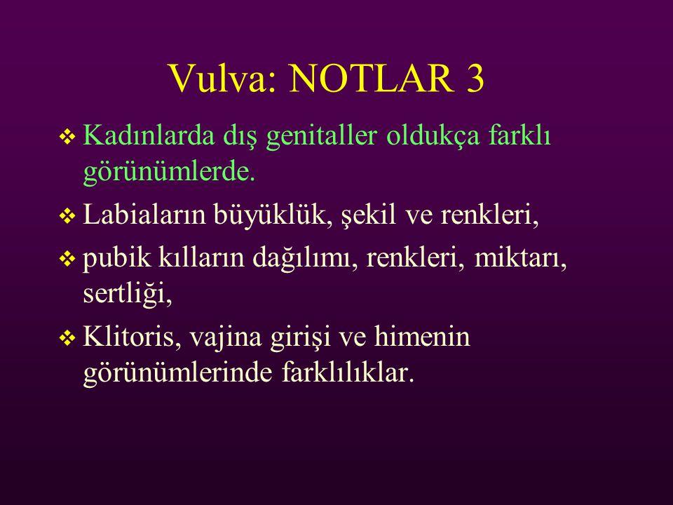 Vulva: NOTLAR 3  Kadınlarda dış genitaller oldukça farklı görünümlerde.  Labiaların büyüklük, şekil ve renkleri,  pubik kılların dağılımı, renkleri