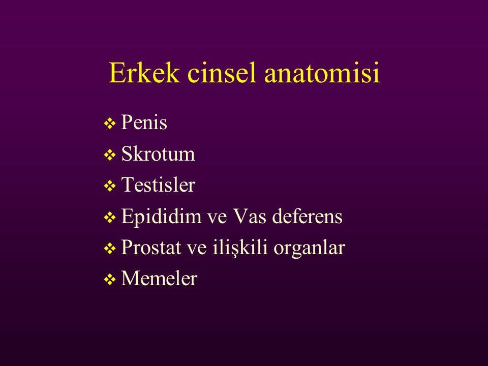 Erkek cinsel anatomisi  Penis  Skrotum  Testisler  Epididim ve Vas deferens  Prostat ve ilişkili organlar  Memeler