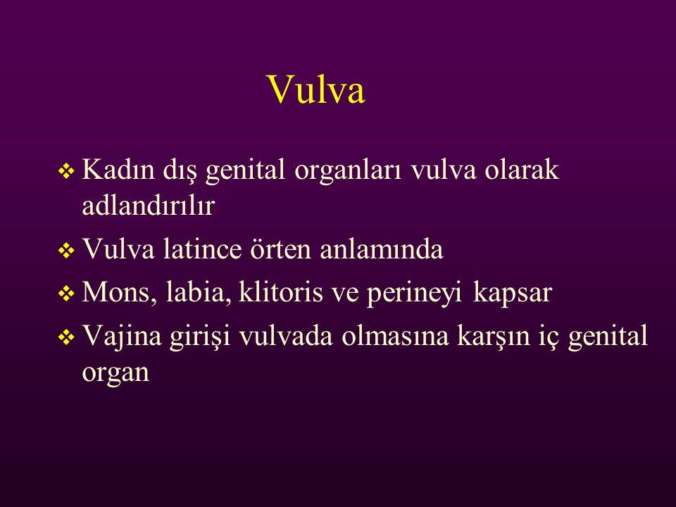 Vulva  Kadın dış genital organları vulva olarak adlandırılır  Vulva latince örten anlamında  Mons, labia, klitoris ve perineyi kapsar  Vajina giri