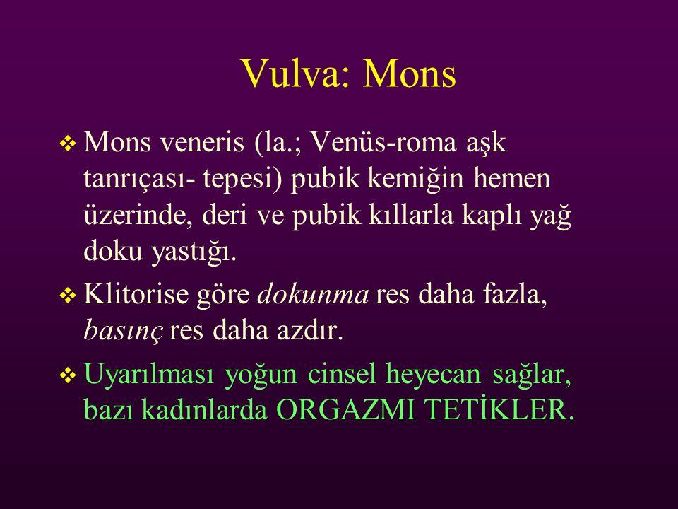 Vulva: Mons  Mons veneris (la.; Venüs-roma aşk tanrıçası- tepesi) pubik kemiğin hemen üzerinde, deri ve pubik kıllarla kaplı yağ doku yastığı.  Klit
