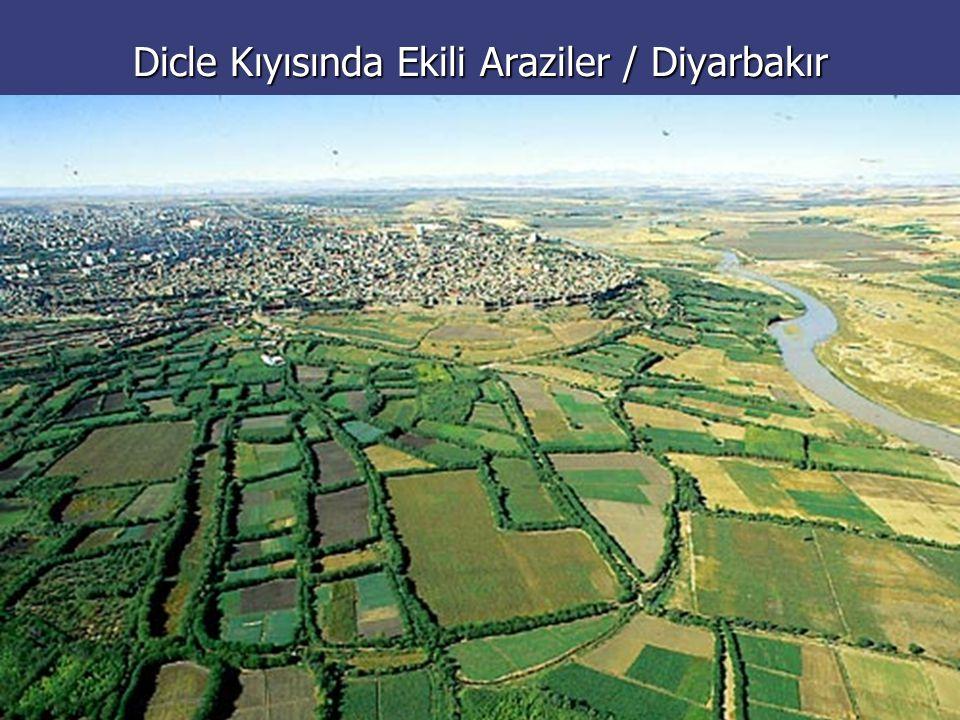 Dicle Kıyısında Ekili Araziler / Diyarbakır