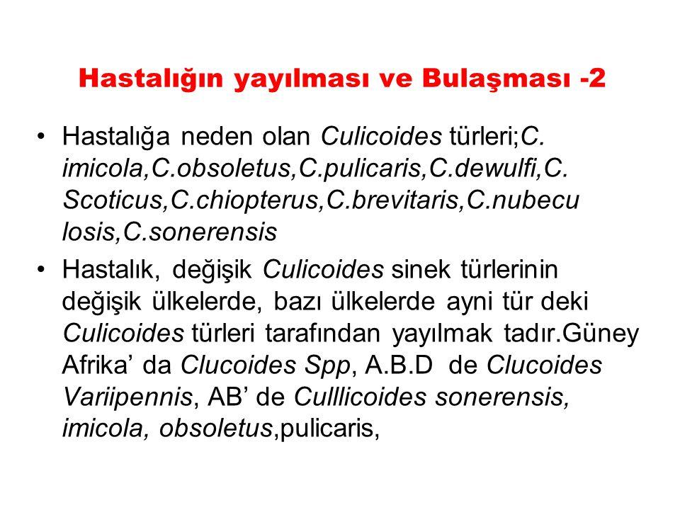 Hastalığın yayılması ve Bulaşması -2 •Hastalığa neden olan Culicoides türleri;C.