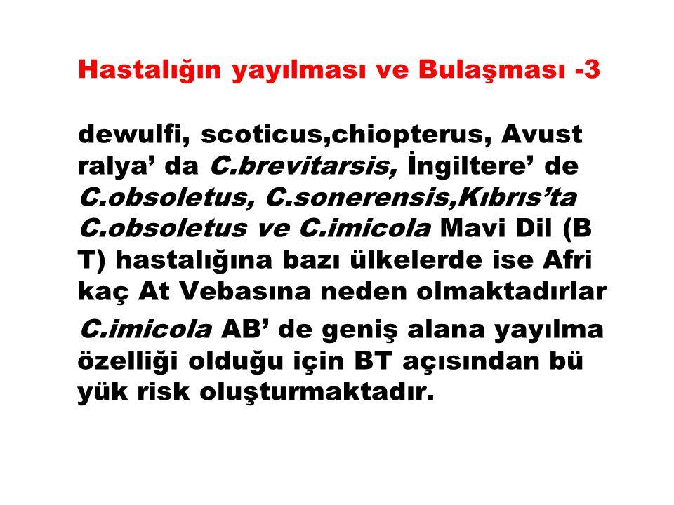 Hastalığın yayılması ve Bulaşması -3 dewulfi, scoticus,chiopterus, Avust ralya' da C.brevitarsis, İngiltere' de C.obsoletus, C.sonerensis,Kıbrıs'ta C.obsoletus ve C.imicola Mavi Dil (B T) hastalığına bazı ülkelerde ise Afri kaç At Vebasına neden olmaktadırlar C.imicola AB' de geniş alana yayılma özelliği olduğu için BT açısından bü yük risk oluşturmaktadır.