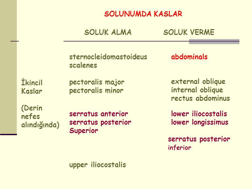 SOLUNUMDA KASLAR İkincil Kaslar (Derin nefes alındığında) SOLUK ALMASOLUK VERME sternocleidomastoideus scalenes pectoralis major pectoralis minor abdo