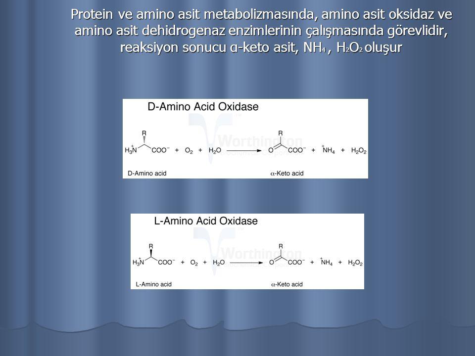 Protein ve amino asit metabolizmasında, amino asit oksidaz ve amino asit dehidrogenaz enzimlerinin çalışmasında görevlidir, reaksiyon sonucu α-keto as