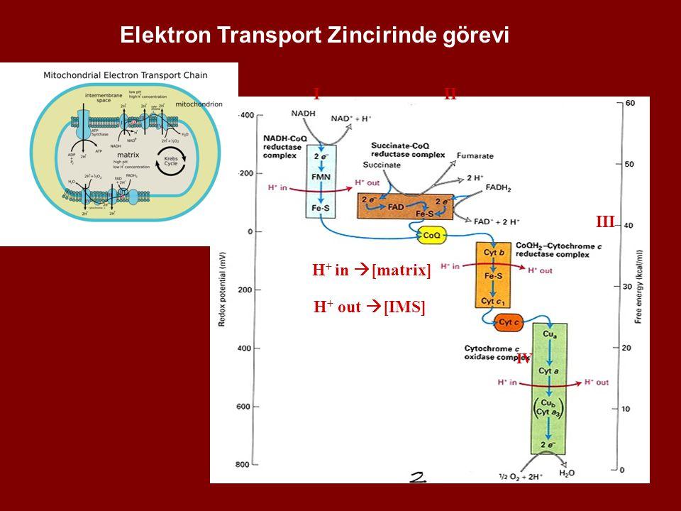 Elektron Transport Zincirinde görevi • H + in  [matrix] H + out  [IMS] III III IV