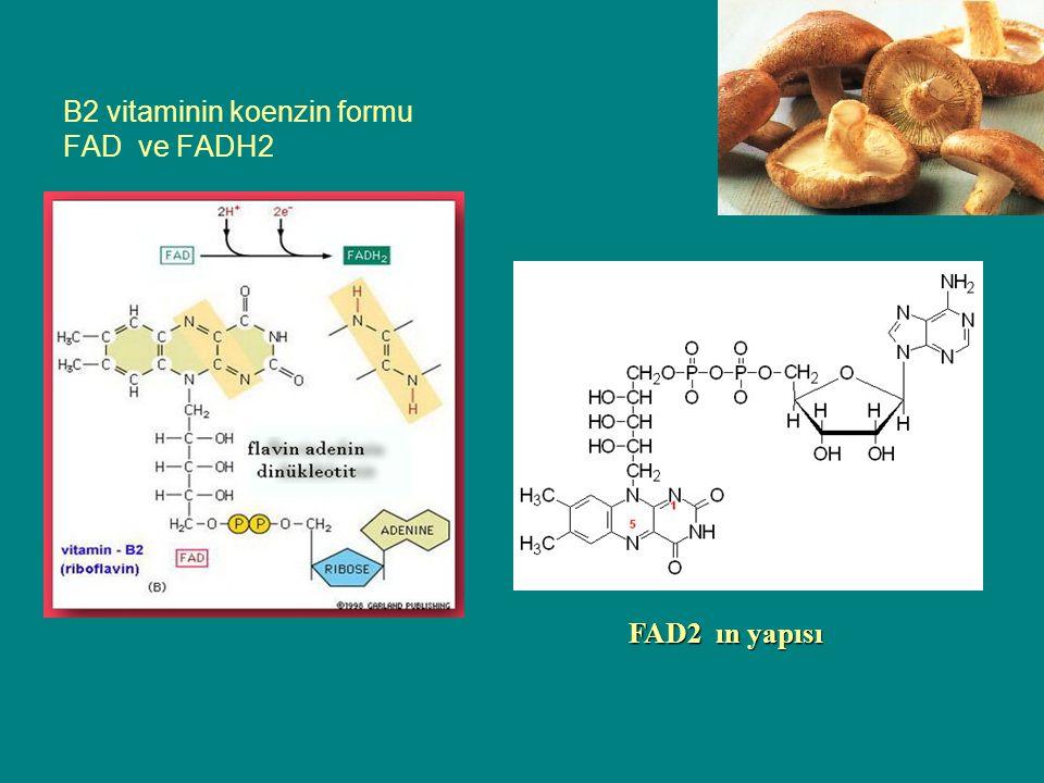 B2 vitaminin koenzin formu FAD ve FADH2 FAD2 ın yapısı