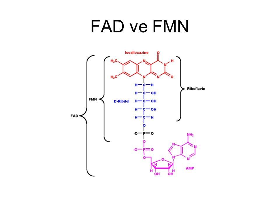 FAD ve FMN