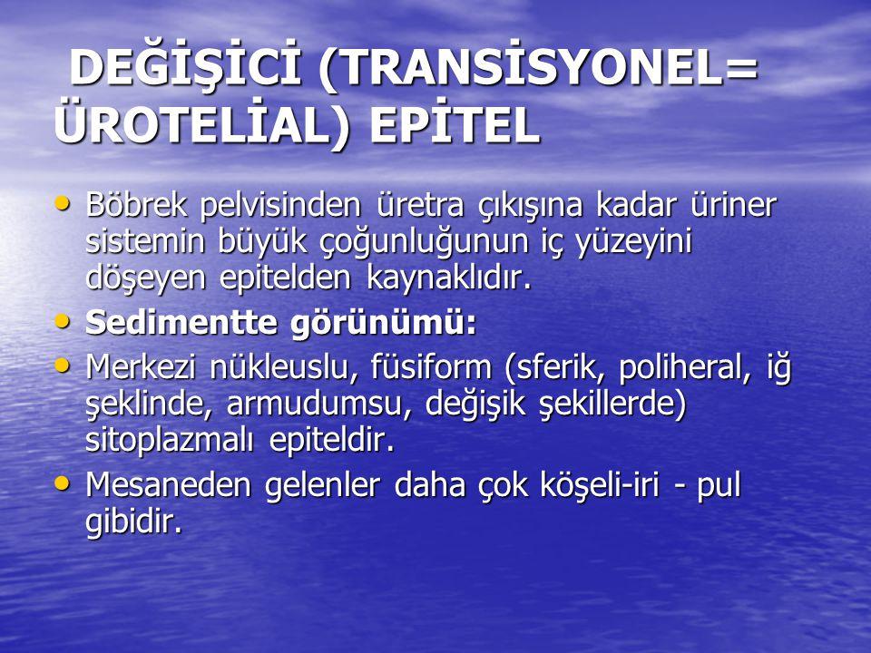 DEĞİŞİCİ (TRANSİSYONEL= ÜROTELİAL) EPİTEL DEĞİŞİCİ (TRANSİSYONEL= ÜROTELİAL) EPİTEL • Böbrek pelvisinden üretra çıkışına kadar üriner sistemin büyük ç