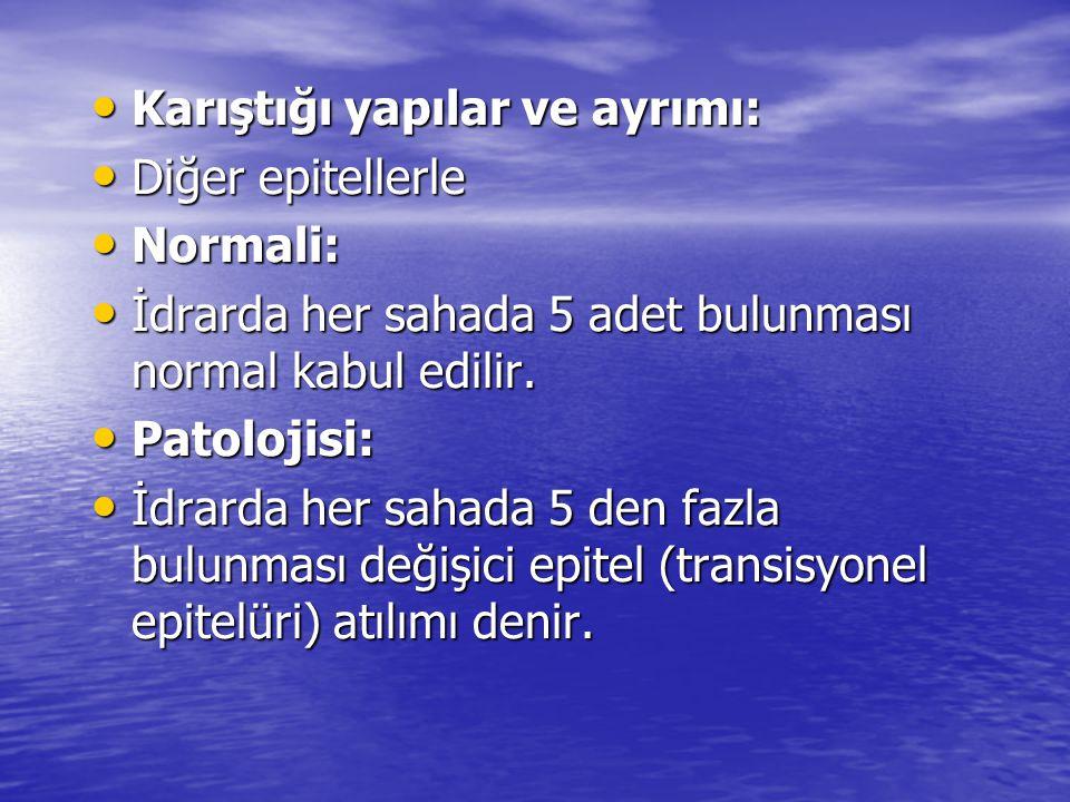 • Karıştığı yapılar ve ayrımı: • Diğer epitellerle • Normali: • İdrarda her sahada 5 adet bulunması normal kabul edilir.
