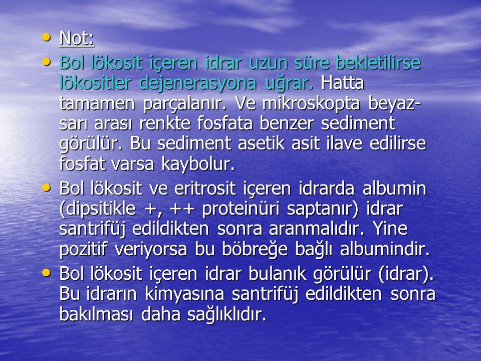 • Not: • Bol lökosit içeren idrar uzun süre bekletilirse lökositler dejenerasyona uğrar.