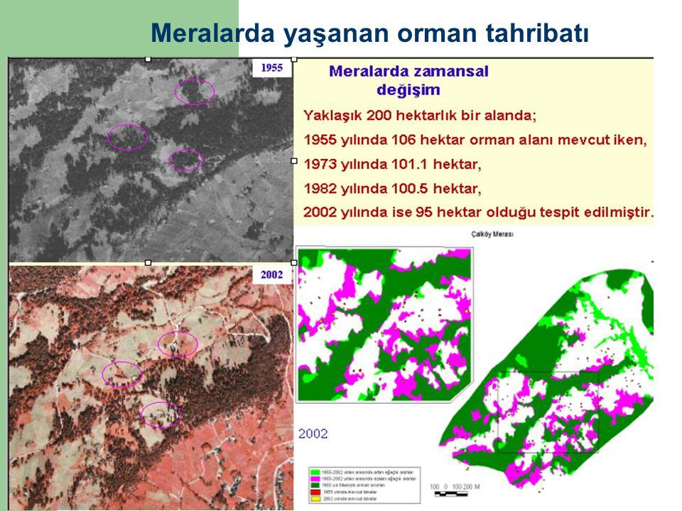 Meralarda yaşanan orman tahribatı