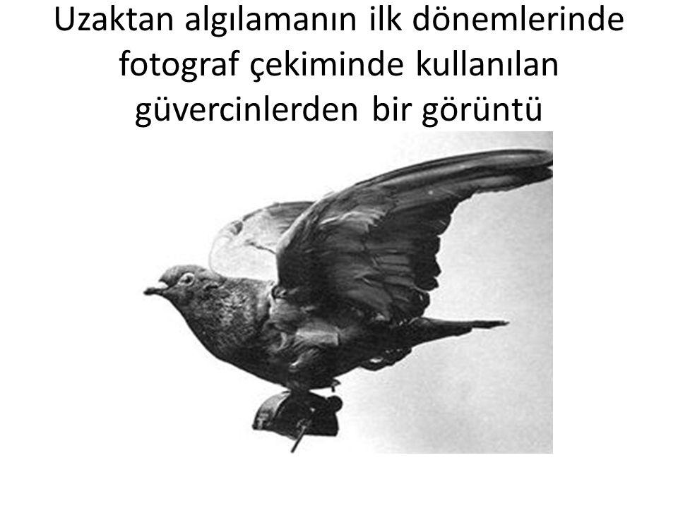 Uzaktan algılamanın ilk dönemlerinde fotograf çekiminde kullanılan güvercinlerden bir görüntü