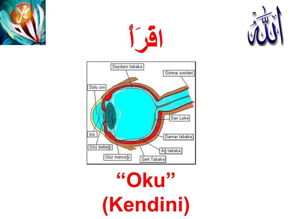 KORNEA Korneanın ön yüzeyi ; gözün temel kırıcı bileşenidir.