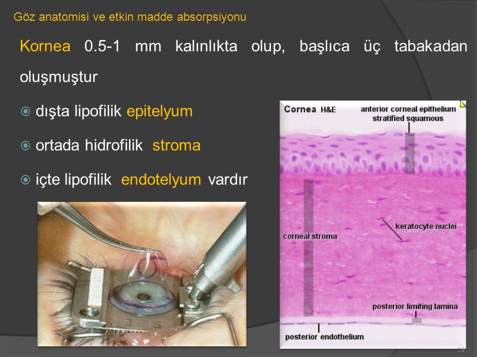 Göz anatomisi ve etkin madde absorpsiyonu Kornea 0.5-1 mm kalınlıkta olup, başlıca üç tabakadan oluşmuştur  dışta lipofilik epitelyum  ortada hidrofilik stroma  içte lipofilik endotelyum vardır 28