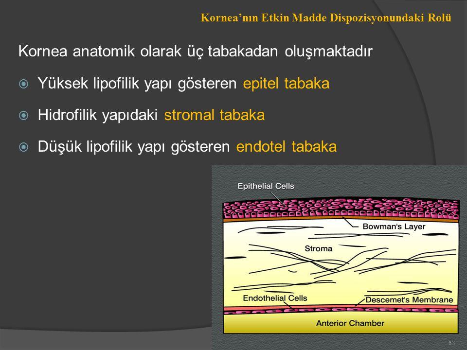 Kornea anatomik olarak üç tabakadan oluşmaktadır  Yüksek lipofilik yapı gösteren epitel tabaka  Hidrofilik yapıdaki stromal tabaka  Düşük lipofilik yapı gösteren endotel tabaka Kornea'nın Etkin Madde Dispozisyonundaki Rolü 63