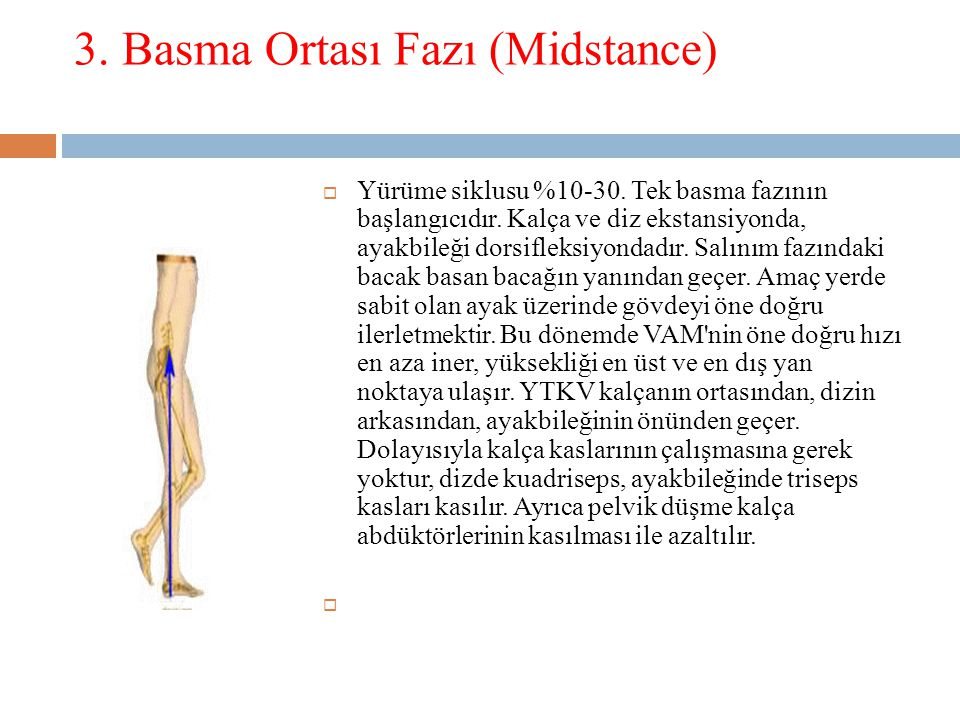 3.Basma Ortası Fazı (Midstance)  Yürüme siklusu %10-30.