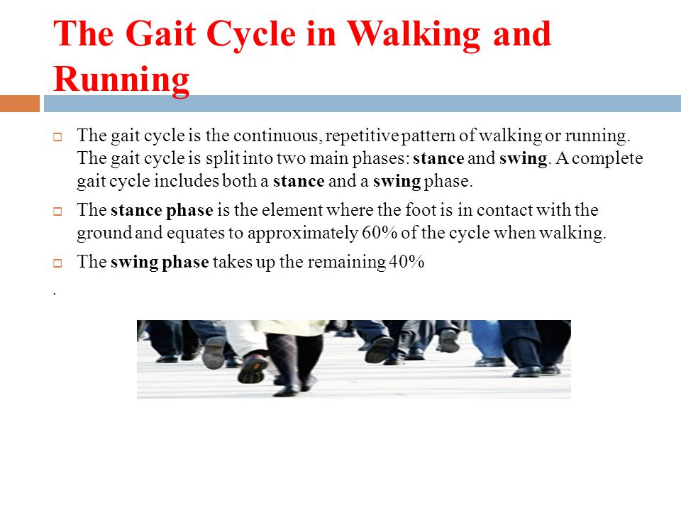 The Gait Cycle in Walking and Running  The gait cycle is the continuous, repetitive pattern of walking or running. The gait cycle is split into two m