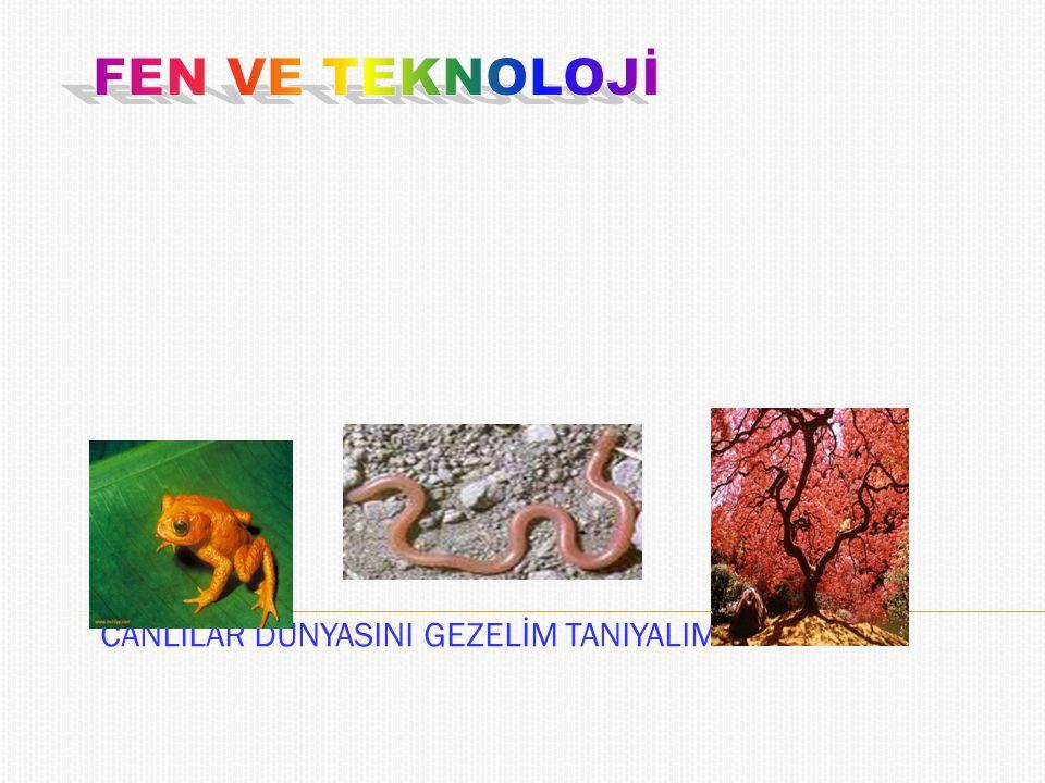  Canlılar dörde ayrılır:  1.Mantarlar  2.Bitkiler  3.Mikroskobik Canlılar  4.Hayvanlar'dır.