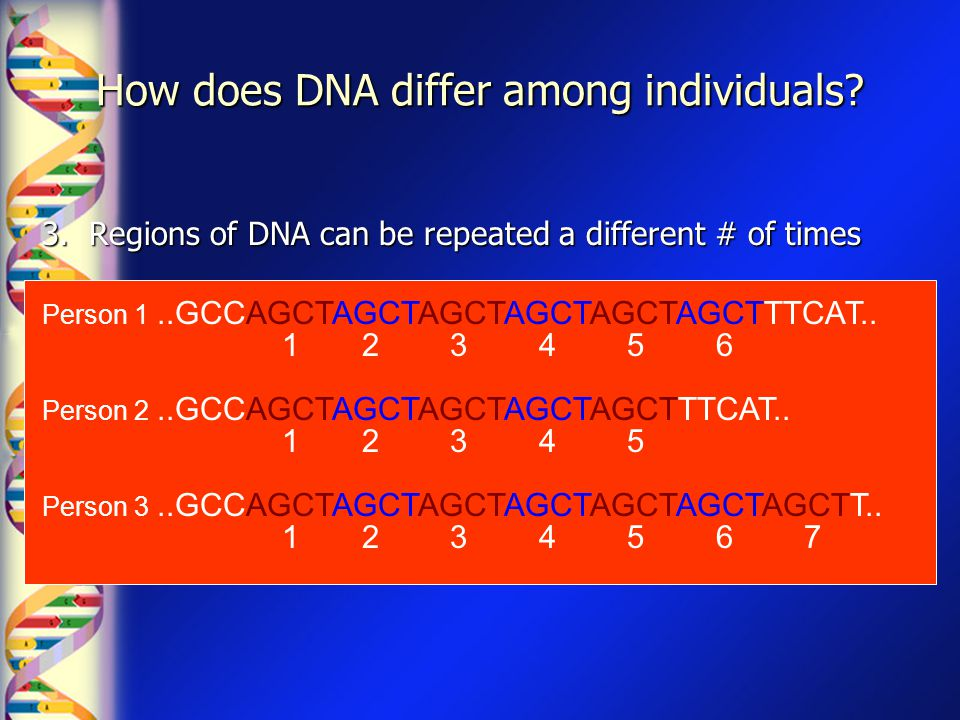 How does DNA differ among individuals? 3. Regions of DNA can be repeated a different # of times Person 1..GCCAGCTAGCTAGCTAGCTAGCTAGCTTTCAT.. 1 2 3 4 5
