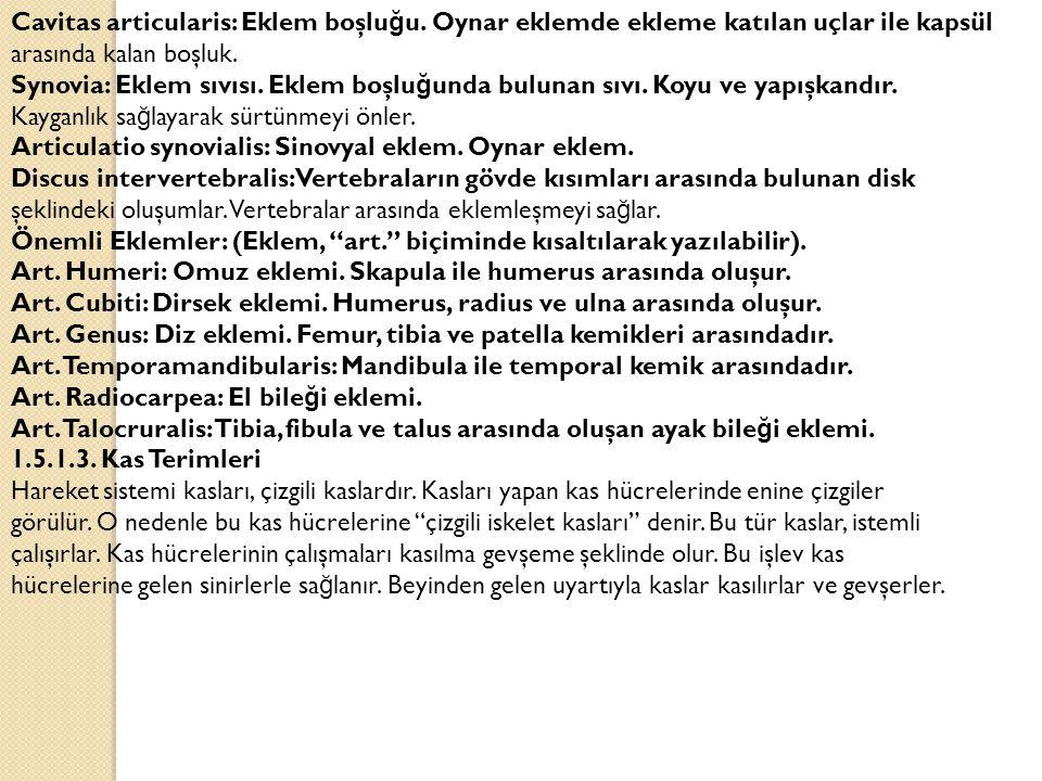 Cavitas articularis: Eklem boşlu ğ u.