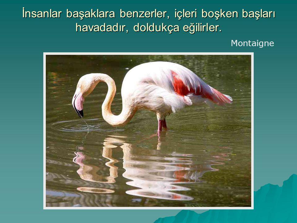 İnsanlar başaklara benzerler, içleri boşken başları havadadır, doldukça eğilirler. Montaigne
